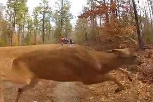 Bike deer collision video